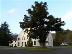 Ballencleroch House at Campsie Glen with the big tree in the foreground